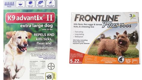 tick medicine for dogs 1000 ideas about tick medicine for dogs on