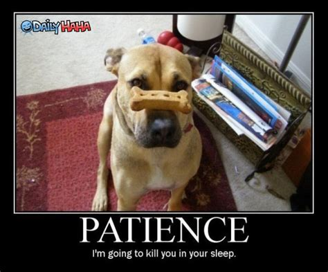 patience puppies patience