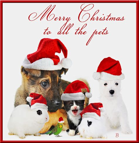 merry christmas    pets pictures   images  facebook tumblr pinterest