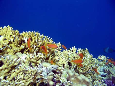 большие фото красного моря
