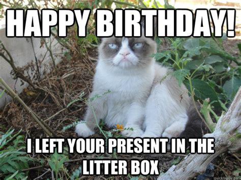 Grumpy Cat Happy Birthday Meme - happy birthday i left your present in the litter box