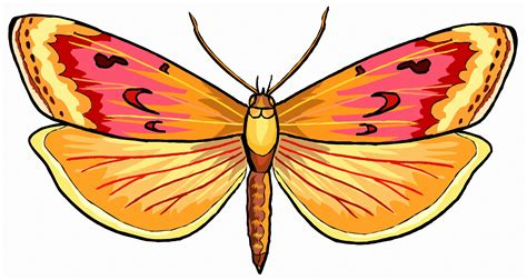 pictures gallery butterfly pictures collection for free