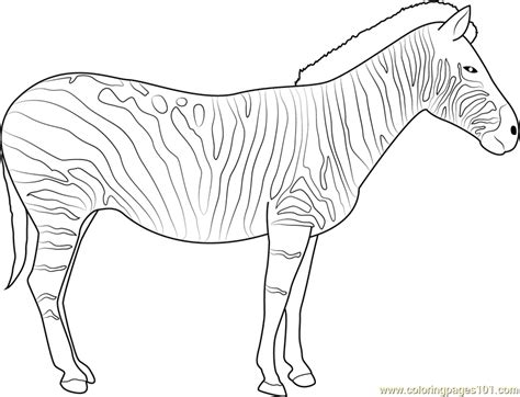 zebra coloring pages zebra coloring page free zebra coloring pages