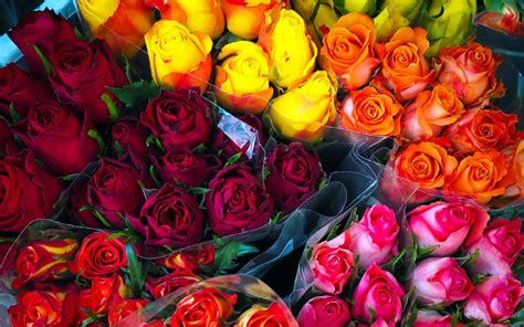 co dei fiori significato dei fiori dillo con un fiore sottocoperta net