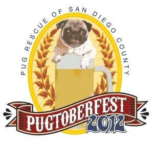 pug rescue of san diego best 25 pug rescue ideas on pug puppies pugs and pug rescue near me