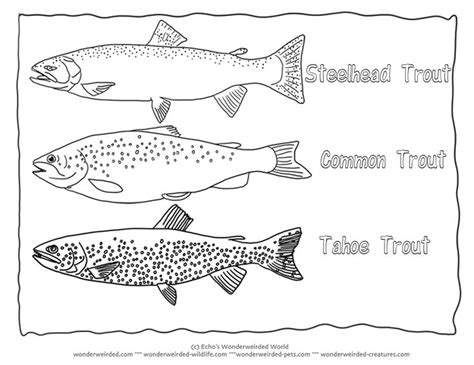 different fish coloring page trout coloring page collectionfrom our wonderweirded fish