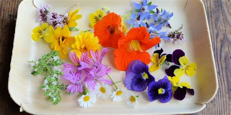 1000 images about edible flowers recipe ideas on edible flower recipes tulips roses and herbs great