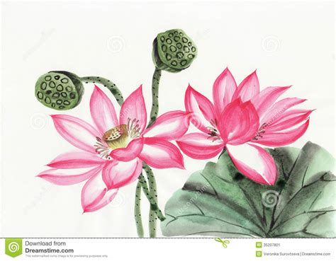 watercolor painting of lotus flower stock image image