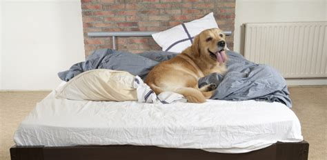 cleaning and your pet
