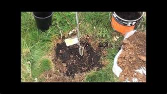 best way to plant a tree youtube