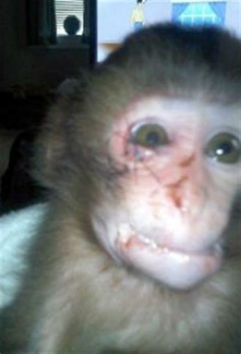 fundraiser  jacob ruehlman ellie attacked snow macaque