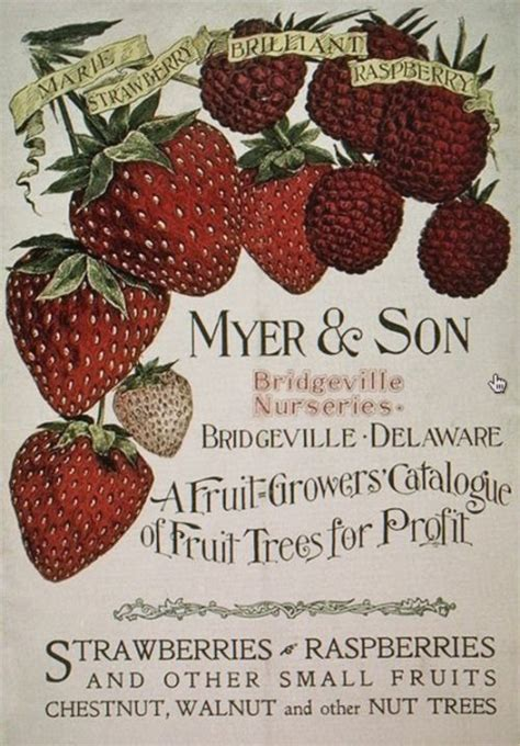 a p fruit growers 145 best vintage seed packet images on
