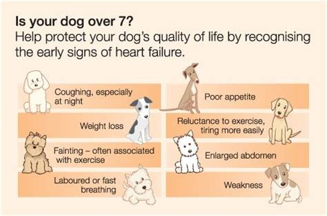 signs of congestive failure in dogs signs of congestive failure pet ideas