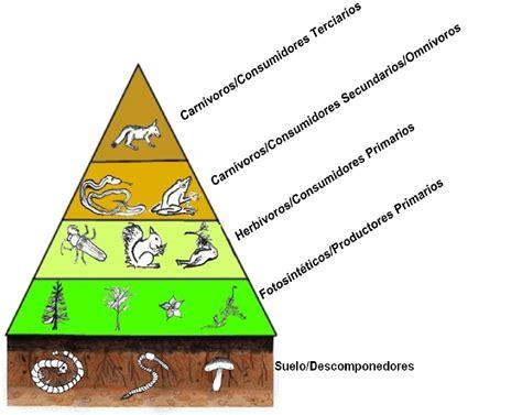 cadena trofica definicion pdf nivel tr 243 fico wikipedia la enciclopedia libre