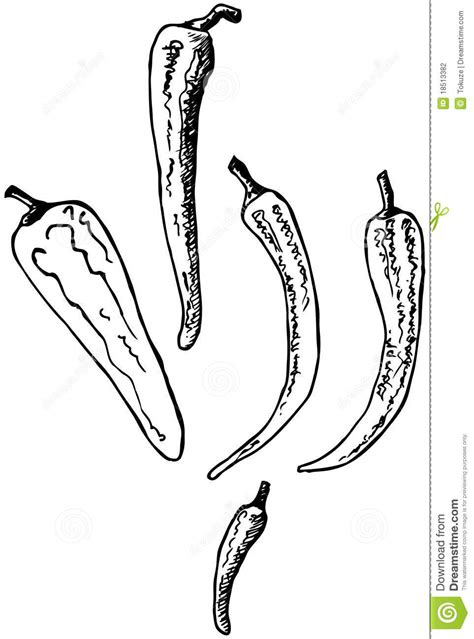 doodle pepper chili pepper doodle stock photography image 18513382