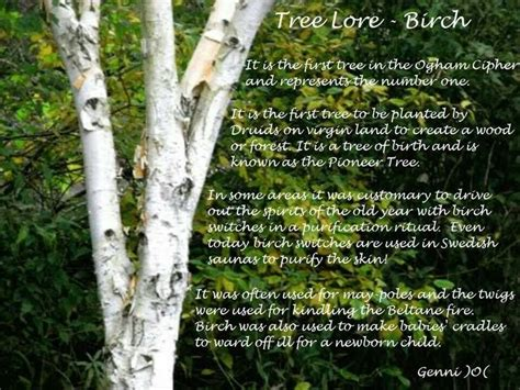 tree and paganism tree lore birch wiccan witchcraft and paganism