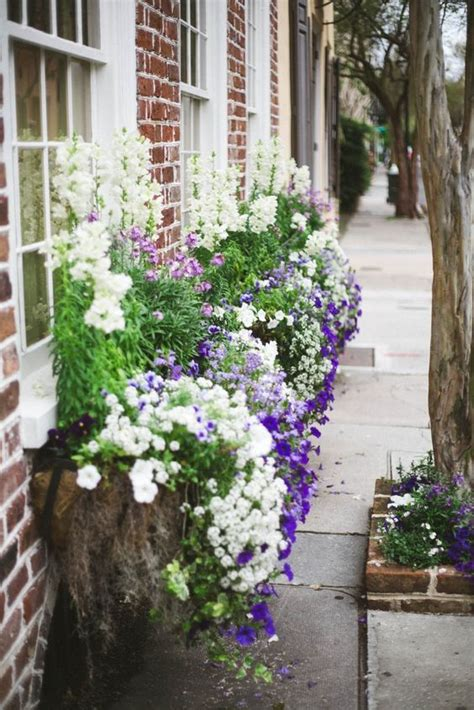 minimalist home decor plants flowers becca haf blogs 1579 best summer containers images on pinterest green