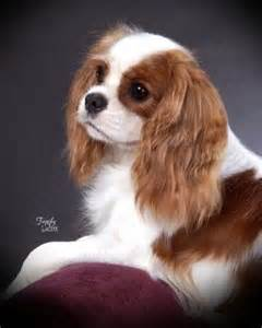 Small Dogs For Home Mixed Breeds Alphabetical Breeds Picture
