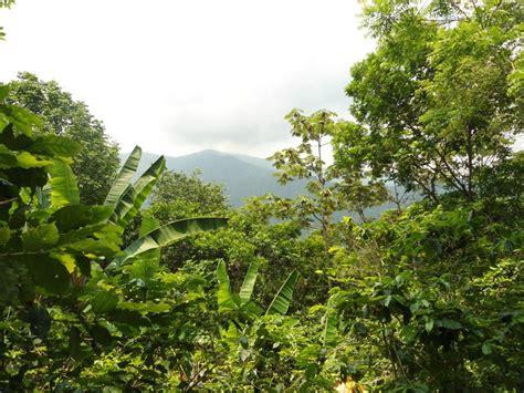imagenes de hábitats naturales civil society organizations offer input on world bank
