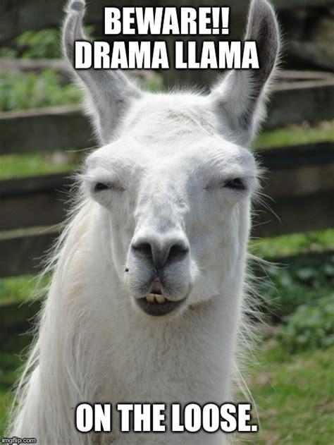 Drama Llama Meme - drama llama imgflip