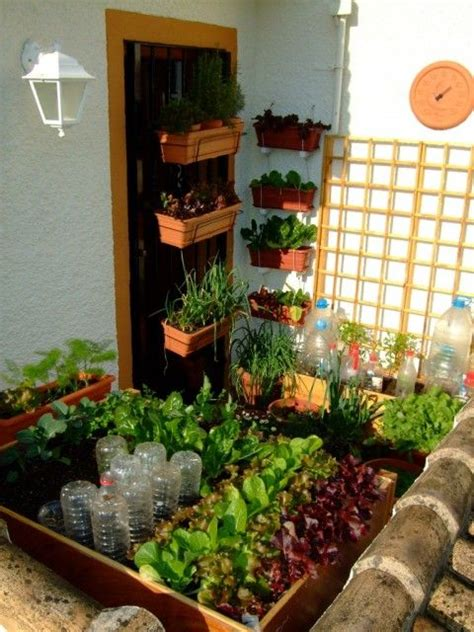 Balcony Vegetable Garden Ideas This Tiny Balcony Vegetable Garden Only Uses 3 Square Yards Of Space And Grows 21 Varieties