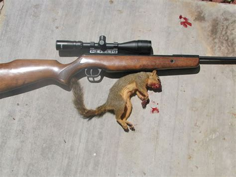 Popular Air Rifles which is the best caliber for airgun