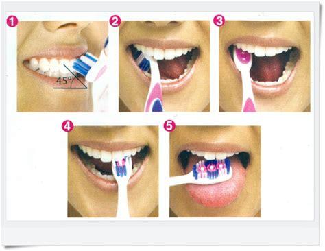 Sikat Gigi Anak Dengan Tutup Unik Sikat Gigi Bayi 3 5tahun tips menyikat gigi yang baik kumpulan artikel unik dan
