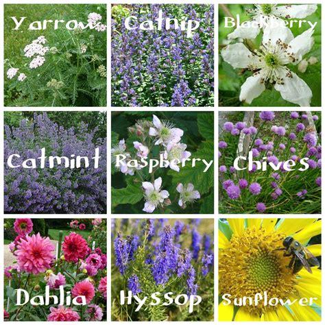 Bee Garden Flowers Be Bee Friendly This Summer Tixeretne