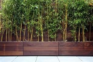bambus terrasse bambus im k 252 bel als sichtschutz und deko auf der terrasse