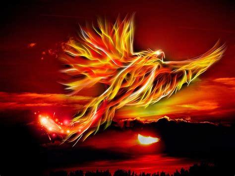 illustration phoenix bird fire sun  image