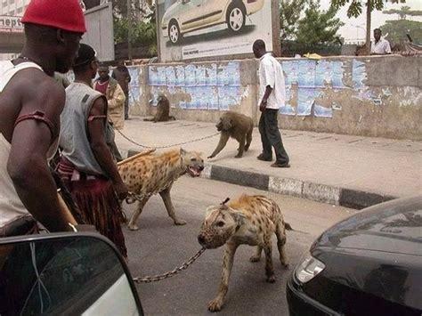 africa     hyena baboon   python   pet