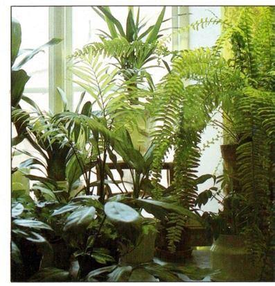 growing plants   north facing window list  plants