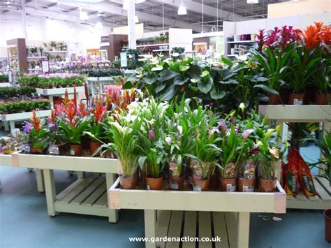 indoor house plants for sale house plants for sale