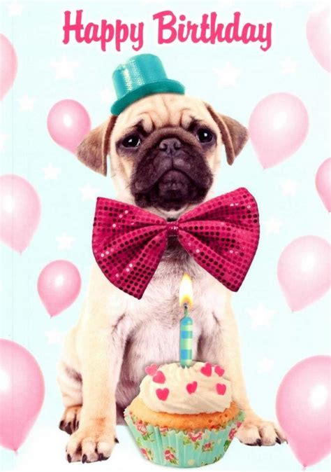 pug puppy birthday pug happy birthday greeting card cards kates