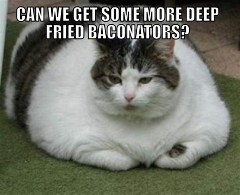 Fat Cat Meme - welcome to memespp com