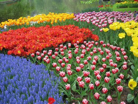 wallpaper bunga tulip di belanda desain rumah belanda klasik hontoh