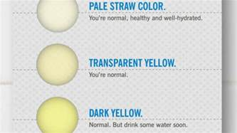 early pregnancy urine color what the color of your says about your health