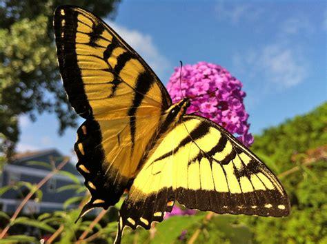 Big Butterfly rdg 2012 summer update rainydaymagazine
