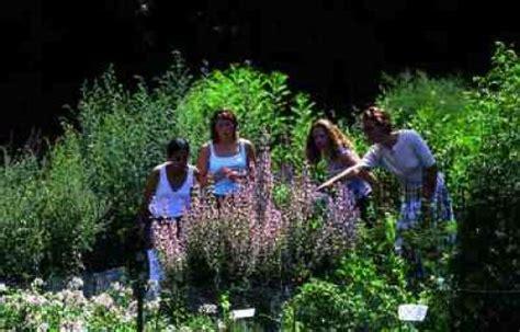 jardin de france jardin de plantes m 233 dicinales de l abbaye de vauclair la
