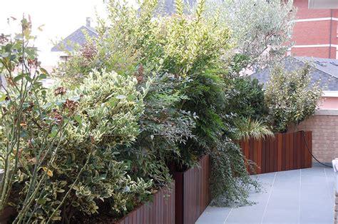 piante per terrazzo giardini pensili e spazi verdi in terrazzo a filo