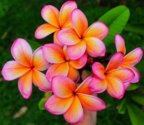 Home Interior Garden best 25 rare flowers ideas on pinterest unusual flowers