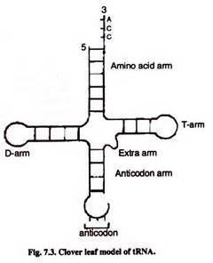 rna types 3 main types of rna with diagram