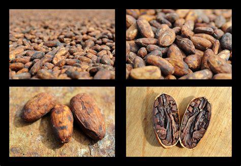jochen weber kakao reportage