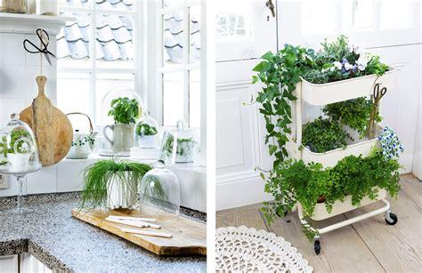 decorar la casa  plantas de interiores