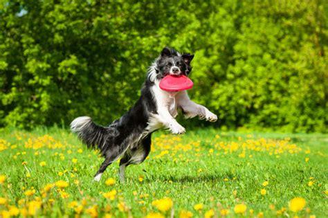 Spiele Für Hunde Im Garten by Hundespiele A Z Hunde