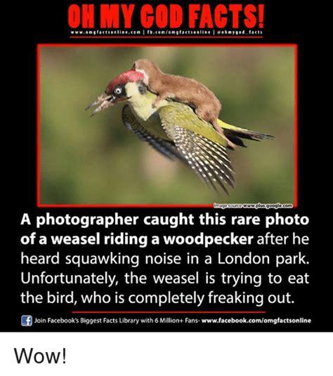 25 best memes about weasel weasel memes
