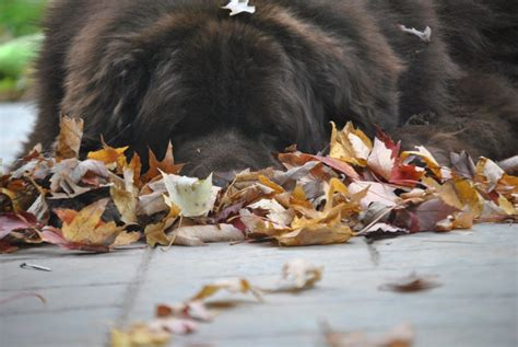 7 Reasons I Look Forward To Fall by 12 Reasons I Look Forward To Fall With My Dogs