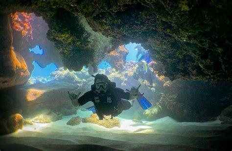 dive tours 25 dive tours from oahu s banzai divers banzai