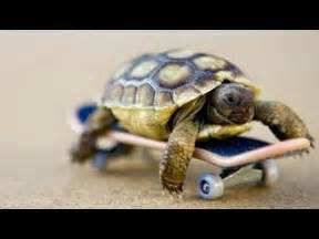 amazon black friday month sale funny and cute tortoise videos compilation youtube