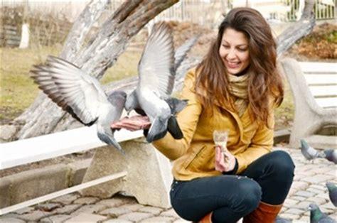 alimentazione piccioni piccioni foto e vettori gratis